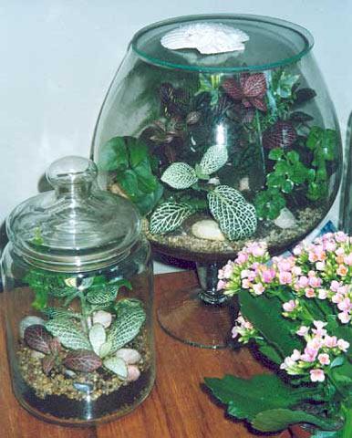 Растения для фиториума