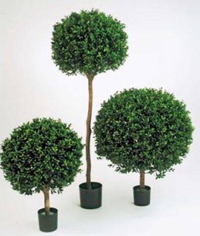 Штамбовые деревца