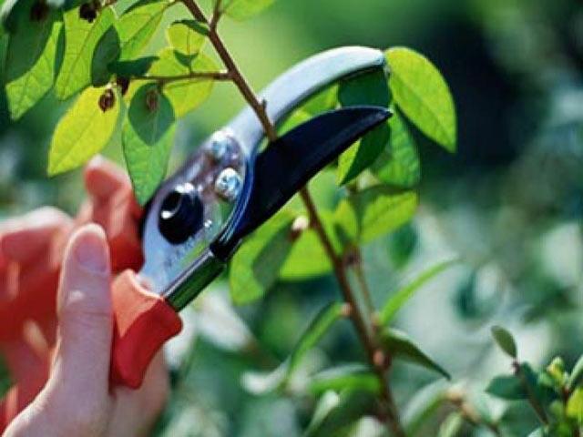 Процесс стрижки дерева