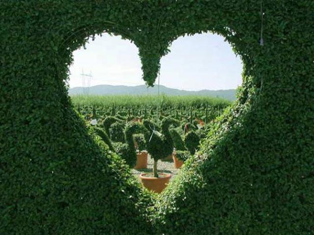 Живая изгородь, как произведение искусства