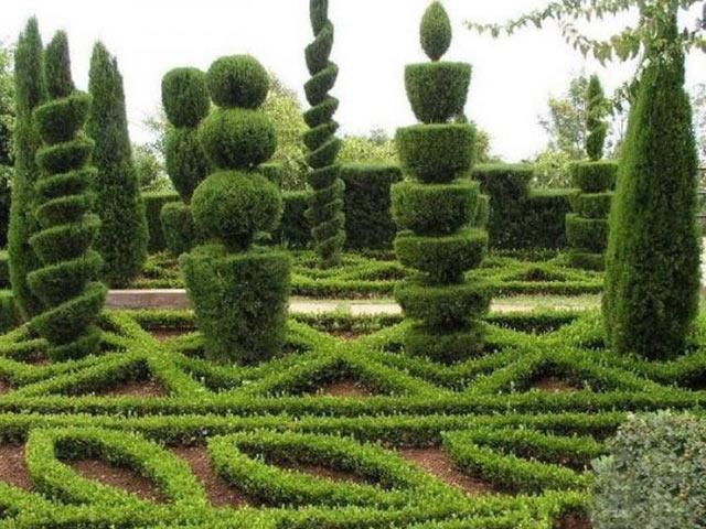 Вечнозеленые скульптуры в парках и садах