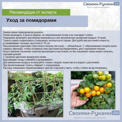 Уход за помидорами если появились плоды